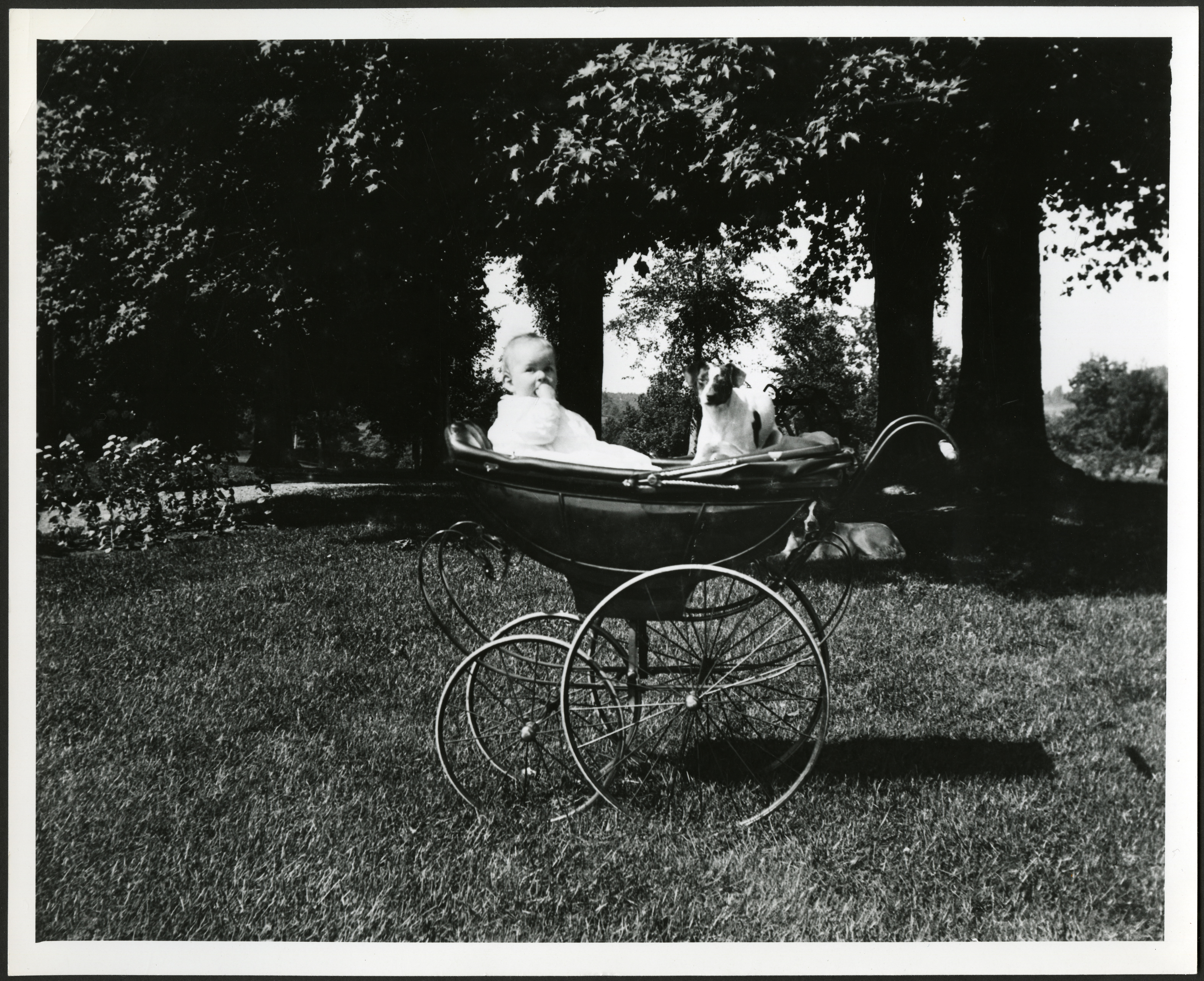 Black and white image of child in carriage with dog.