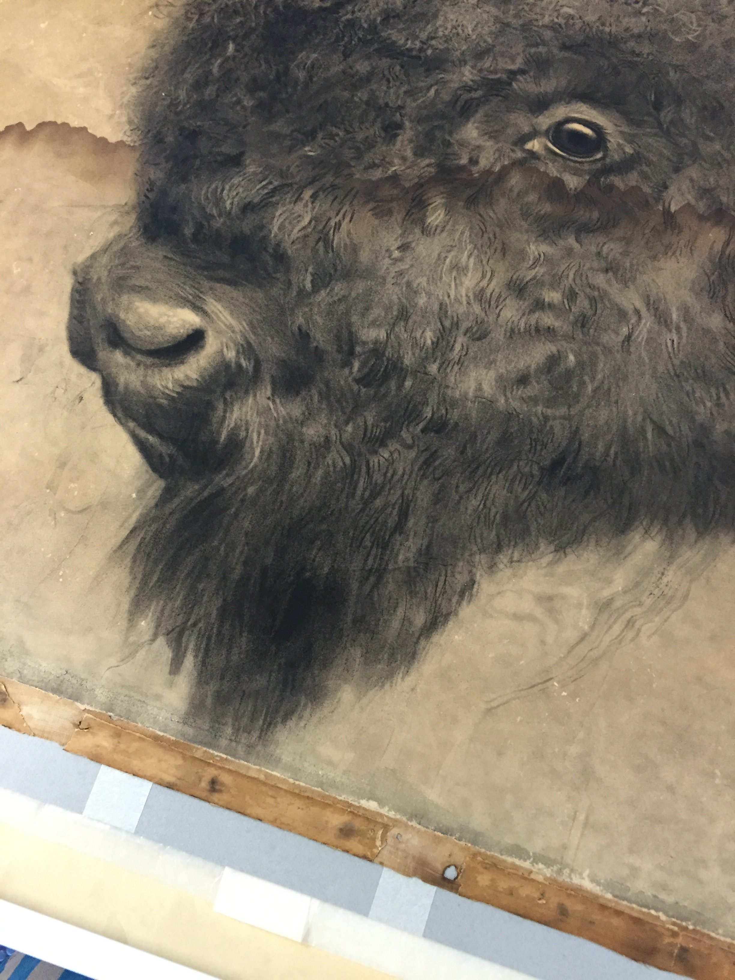Worn tan paper with side, face-view of bison