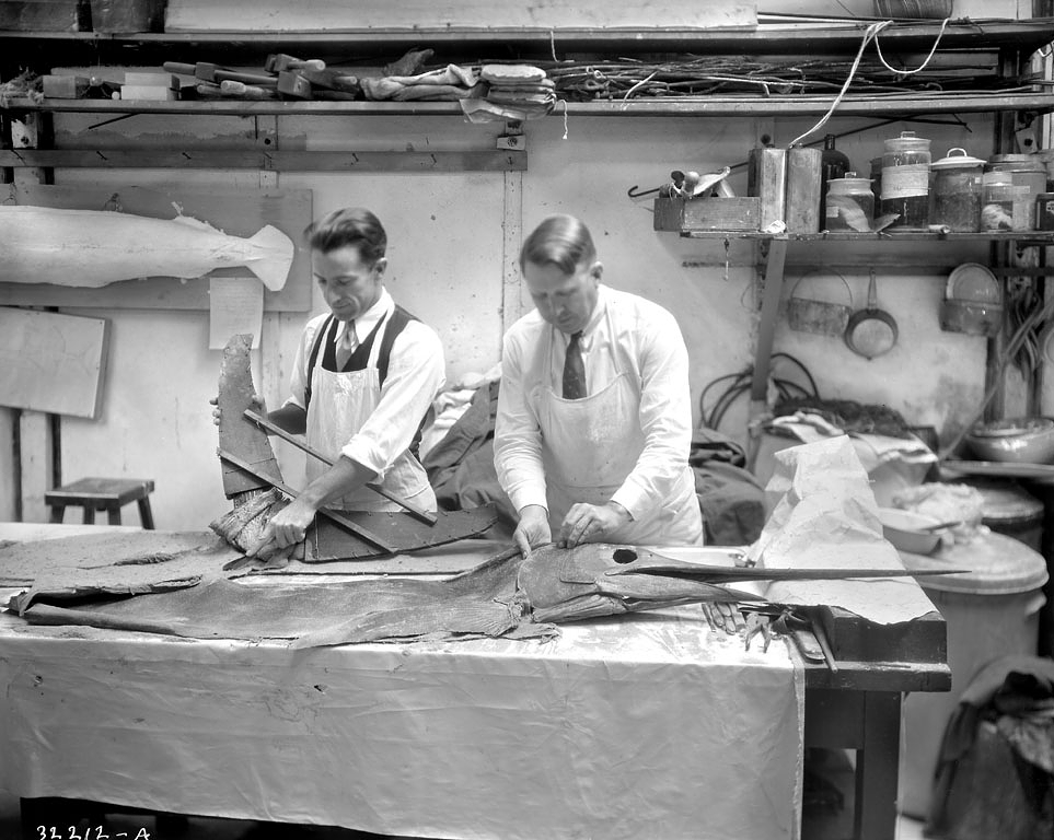 Aschemeier and Perrygo Working on Roosevelt's Sailfish, 1935.