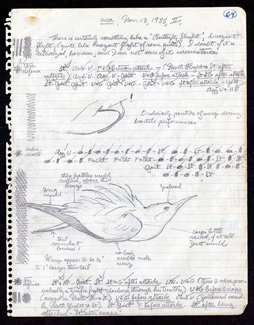 Torn sheet of notebook paper with notes and a drawing of a gull.
