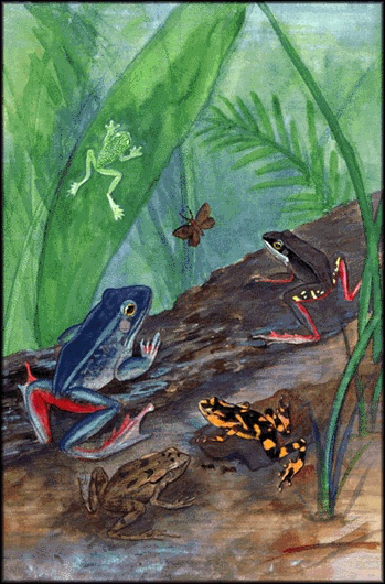 Color drawing of 5 tropical frogs on forest floor with green leaves.