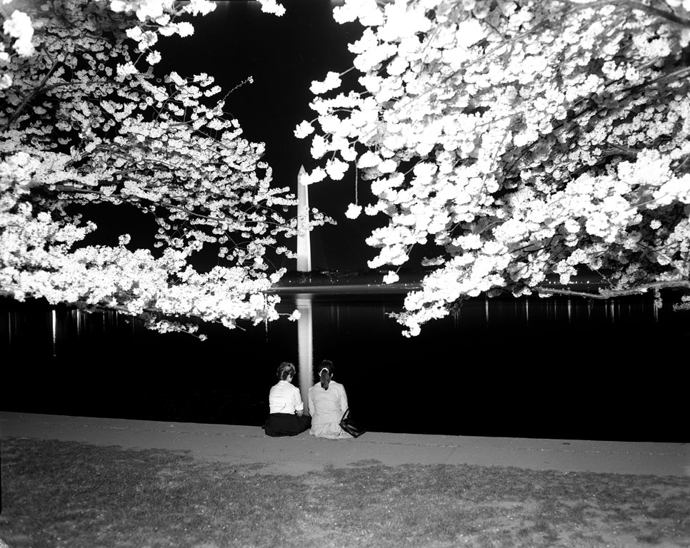 Two girls view the cherry blossoms at night from the Tidal Basin, undated, Scurlock Studio.