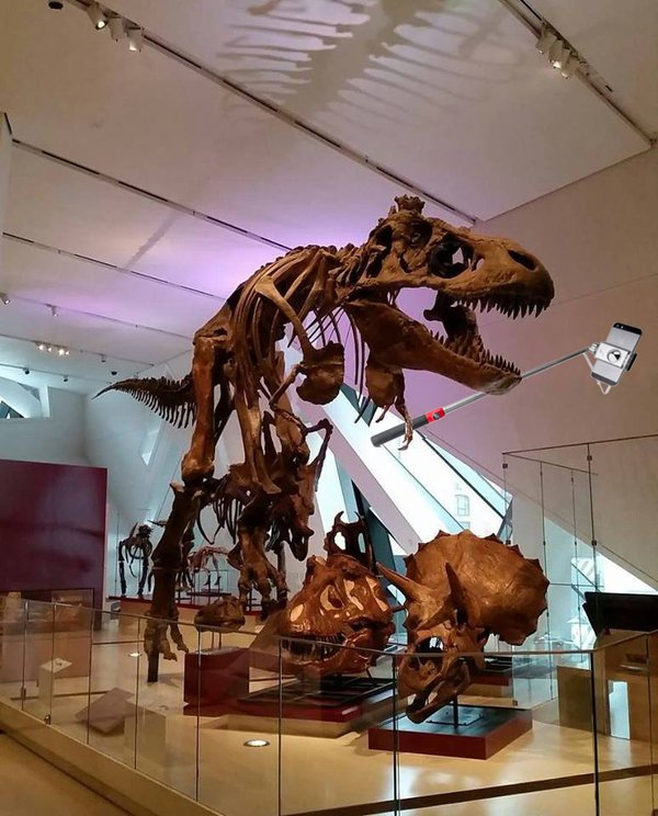 T-rex selfie from Royal Ontario Museum.