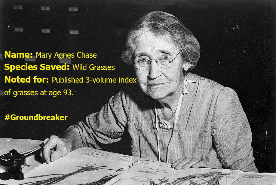 Botanist Mary Agnes Chase was an expert in grasses, as well as a suffragette.
