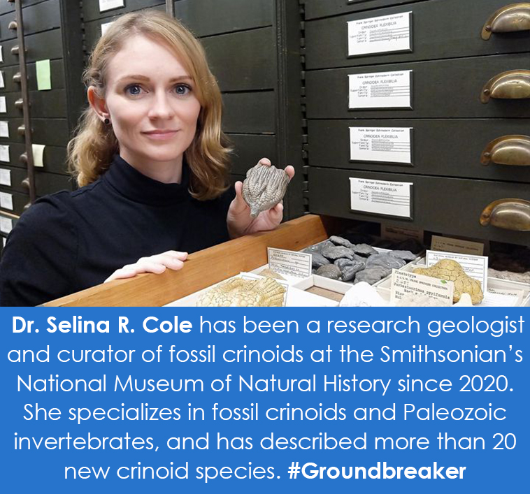 A person holds a fossil above an open cabinet drawer.