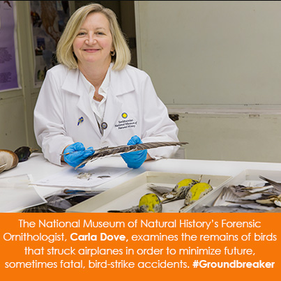The National Museum of Natural History's Forensic Ornithologist, Carla Dove, examines the remains of