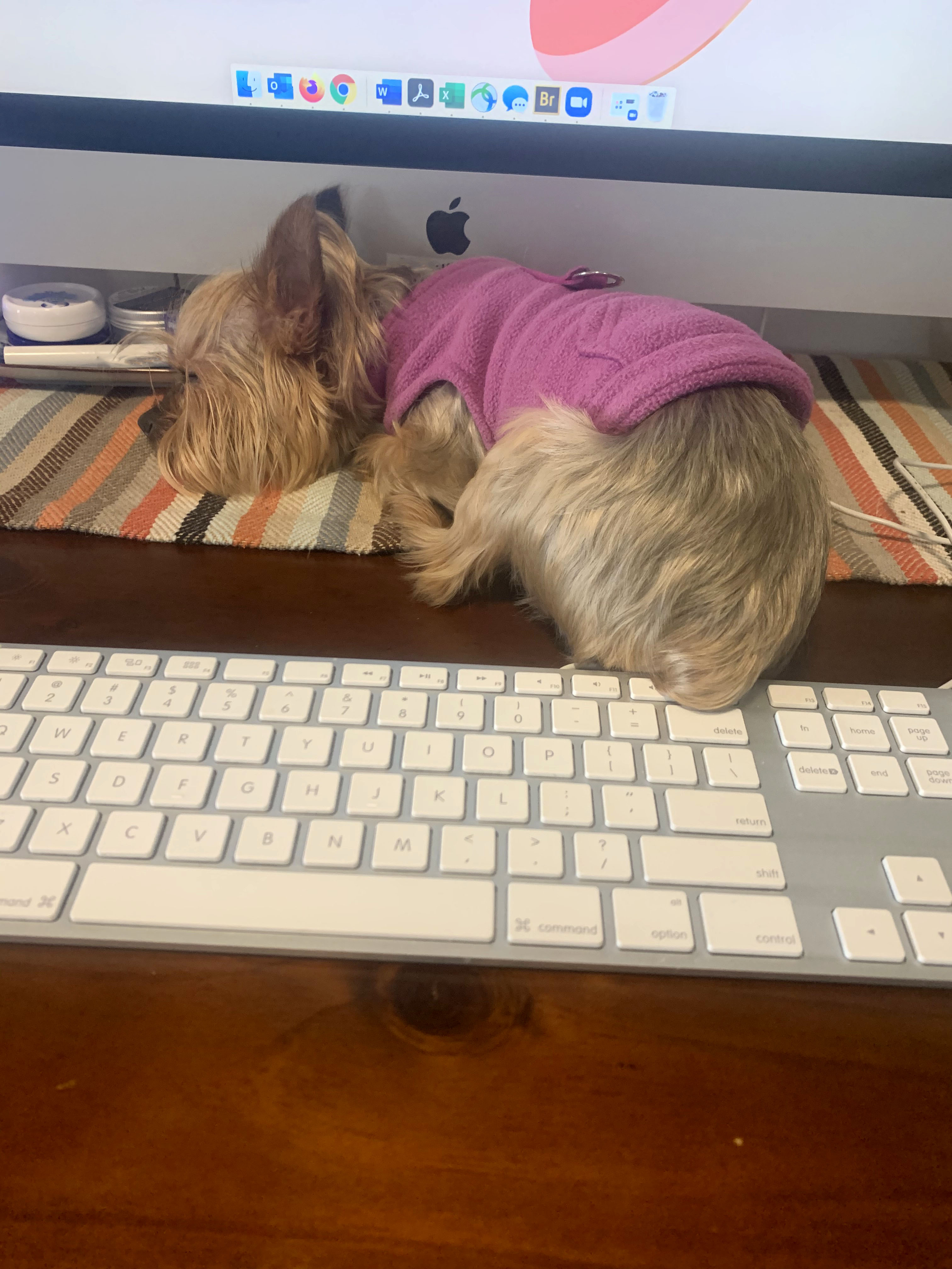 A small dog sits in front of a computer.