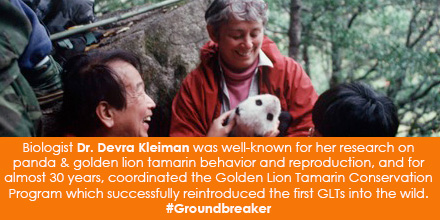 Biologist Devra Kleiman was well-known for her research on panda and golden lion tamarin behavior an
