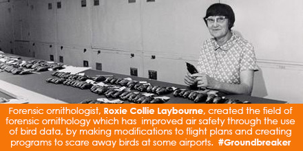 Forensic ornithologist, Roxie Collie Laybourne, created the field of forensic ornithology which has