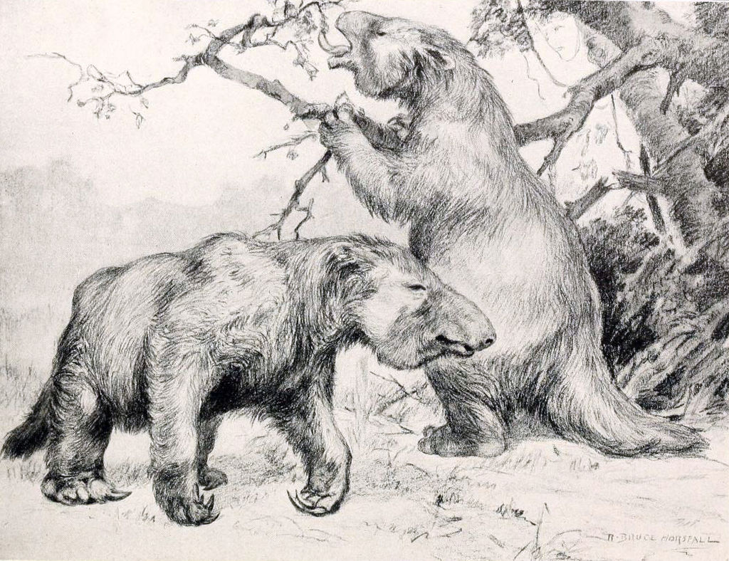 black and white illustration of 2 sloths, one walking on 4 legs, one on two legs gripping tree branc