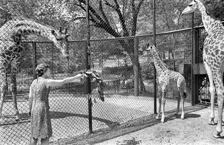 Cecelia Gabriel Visits Cecelia the Giraffe