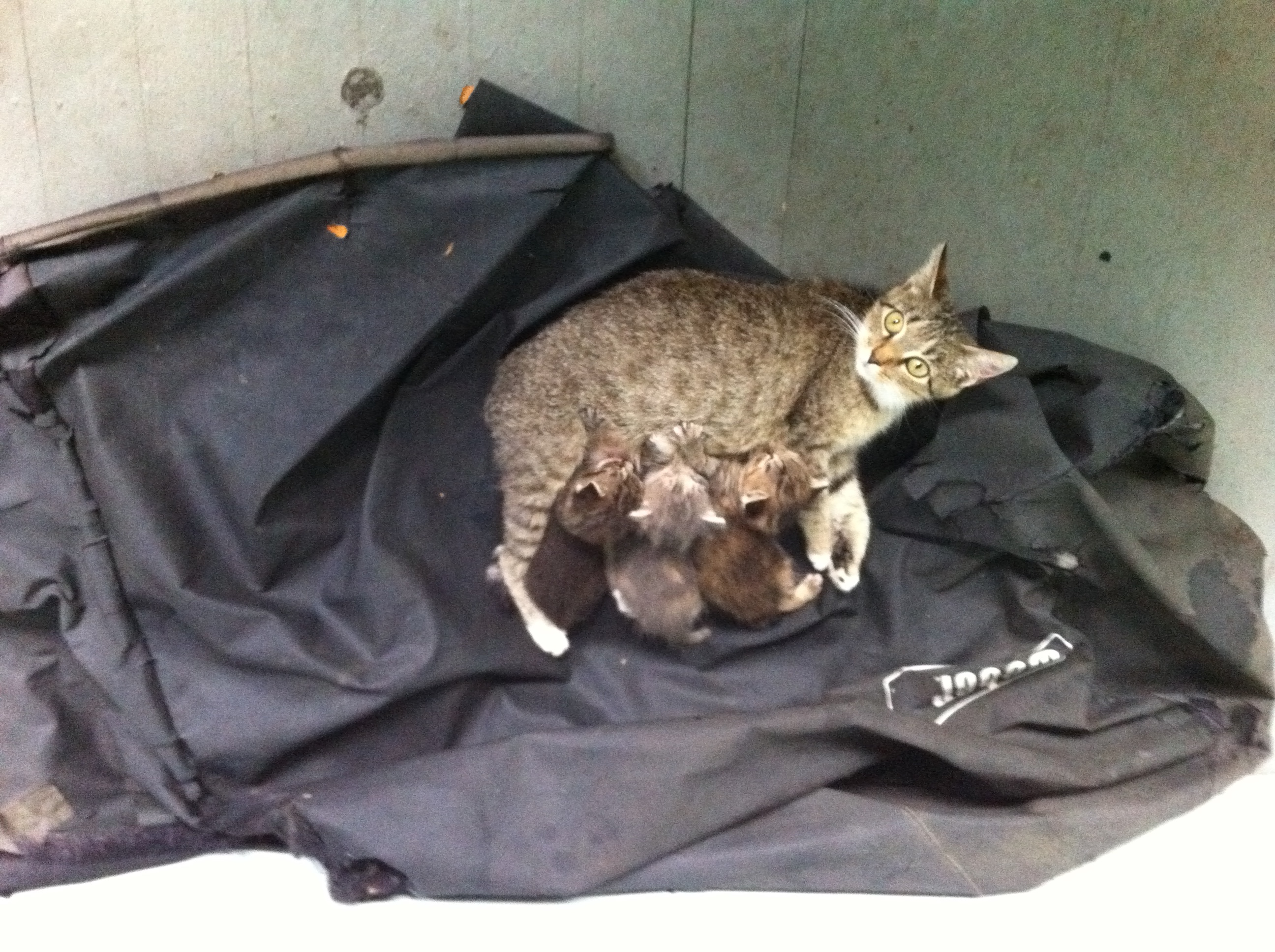A cat and her kittens.