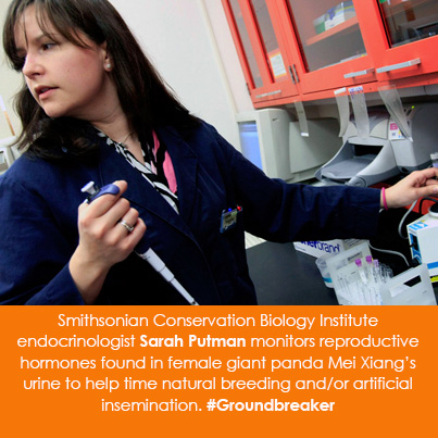 Smithsonian Conservation Biology Institute endocrinologist Sarah Putman monitors reproductive hormon