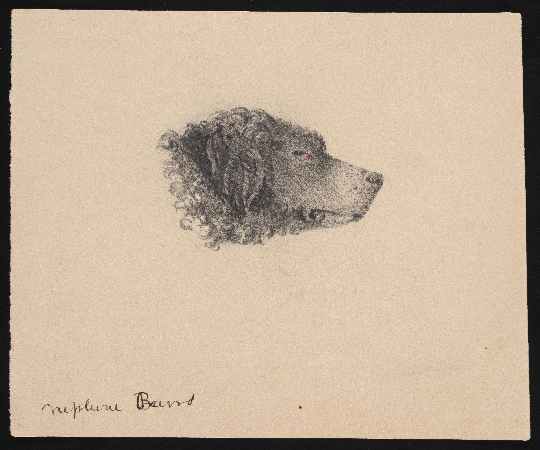 """Drawing of Spencer Fullerton Baird's Pet Dog """"Neptune"""""""