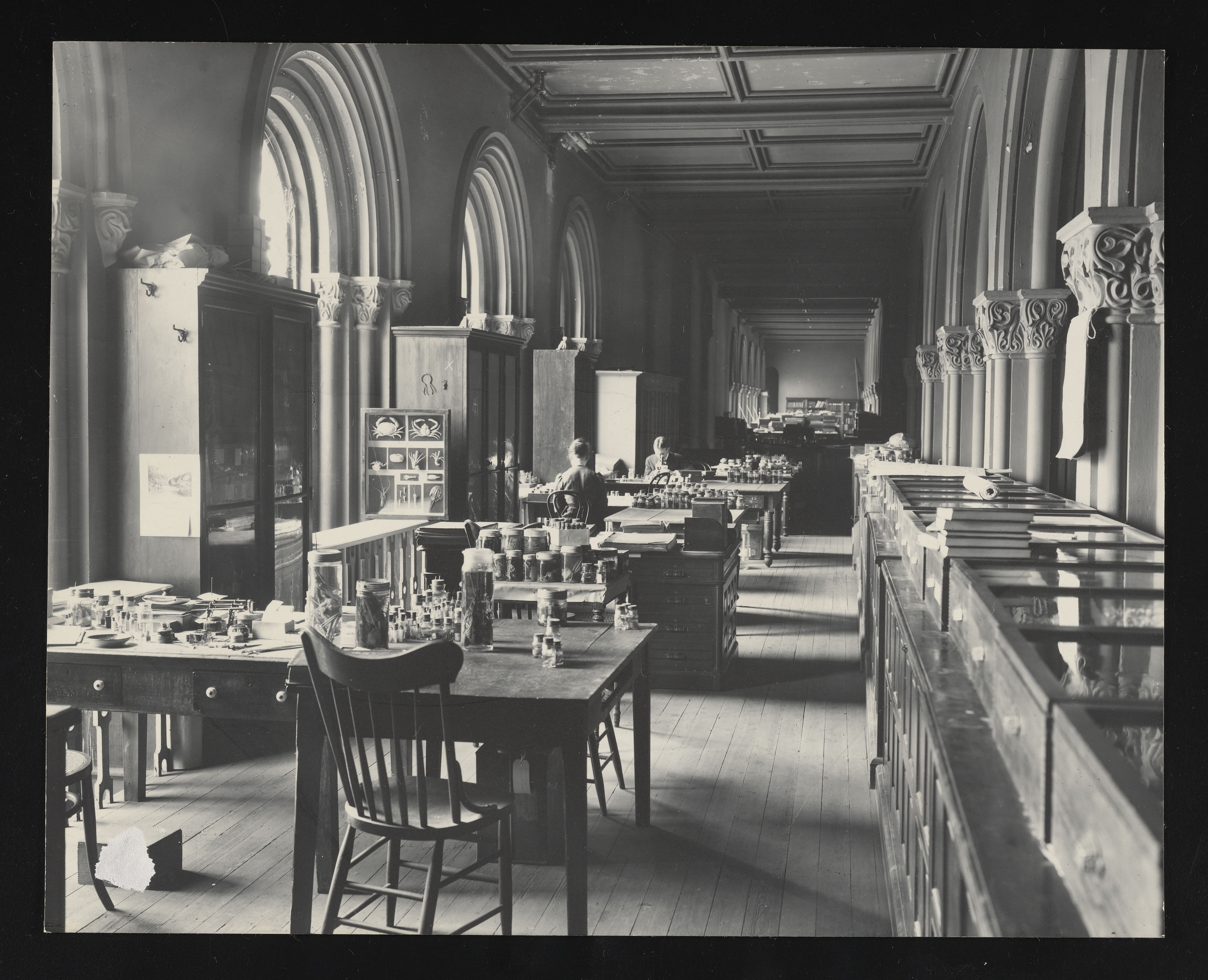 Division of Marine Invertebrates, Lower Main Hall, Smithsonian Institution Building, or Castle
