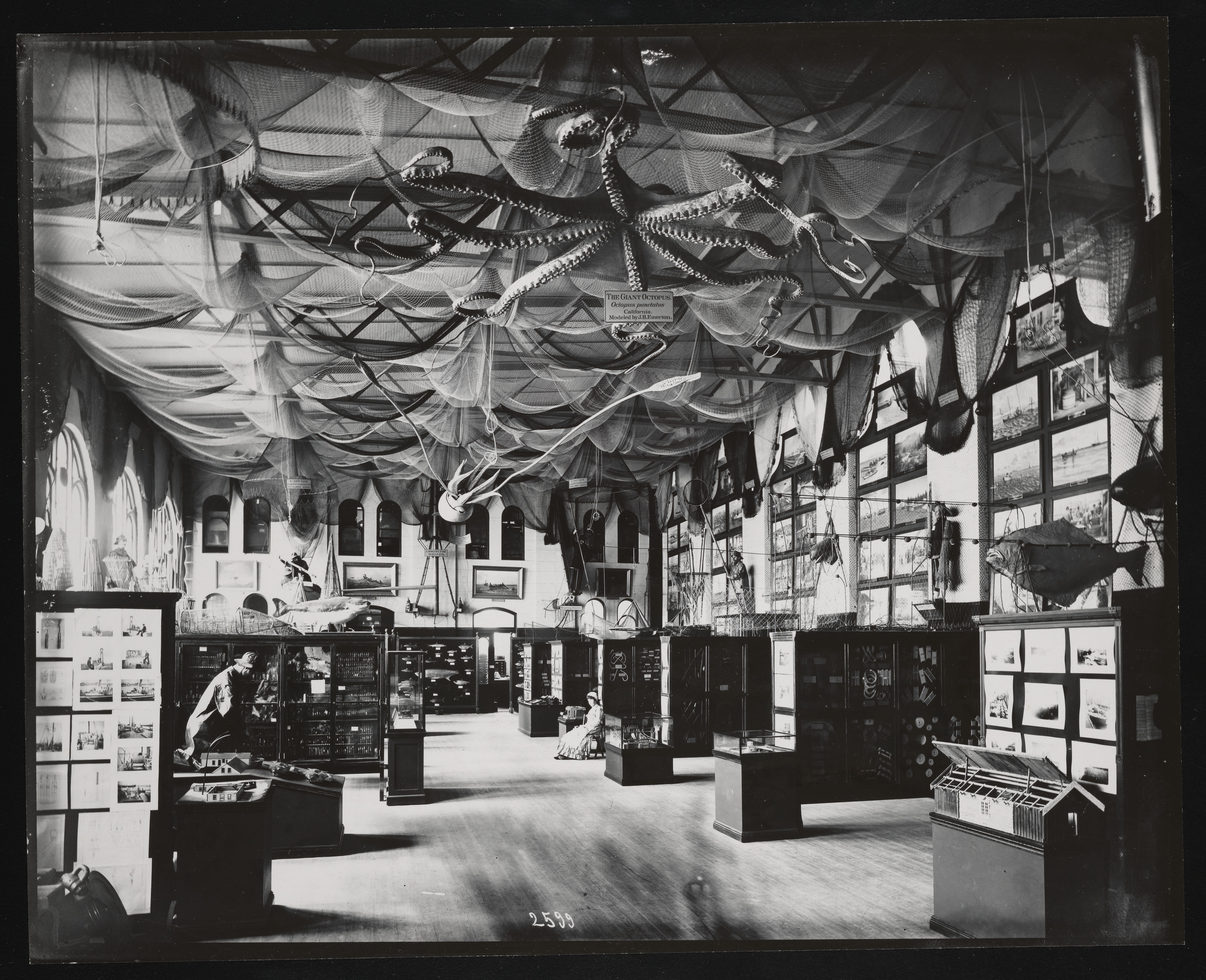 Fisheries Exhibits, United States National Museum
