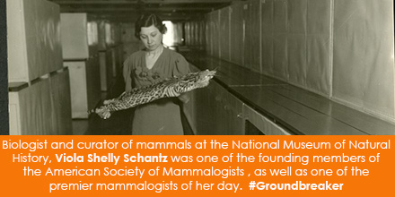 Biologist and curator of mammals at the National Museum of Natural History, Viola Shelly Schantz was