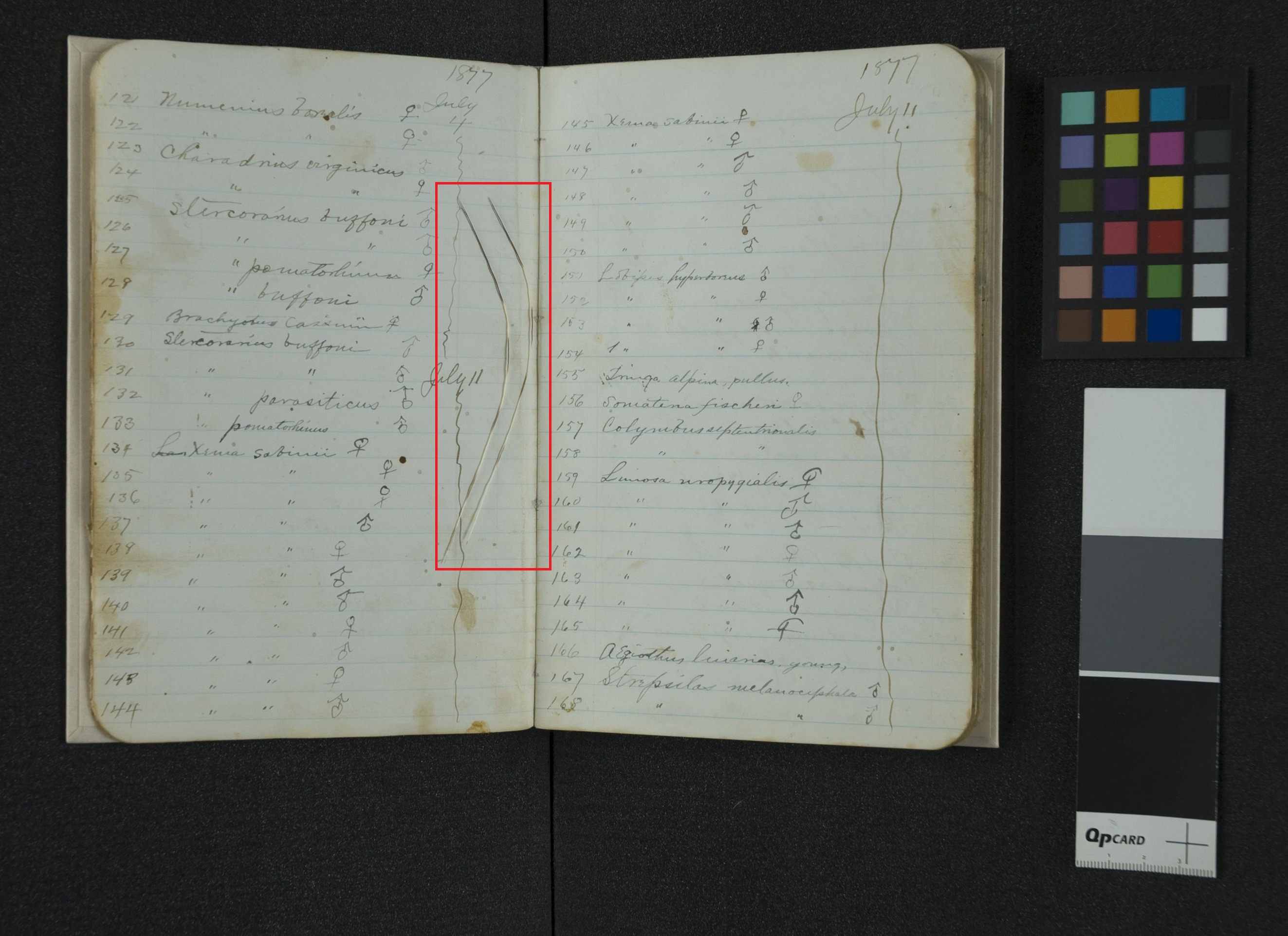 The mystery hairs, November 1, 2013, by Andrea Hall, Accession 12-320 - Edward William Nelson Field Notes, 1869-1886, Smithsonian Institution Archives.
