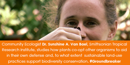 Community Ecologist Dr. Sunshine A. Van Bael, Smithsonian Tropical Research Institute, studies how p