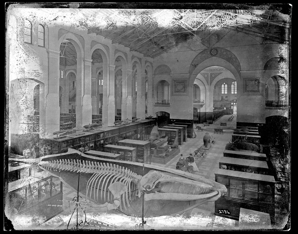Natural History Exhibit in the South Hall, U.S. National Museum, c. 1881-1887.