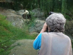 Jessie Cohen photographing Tai Shan, July 2008, by Marvin Heiferman, digital photograph.