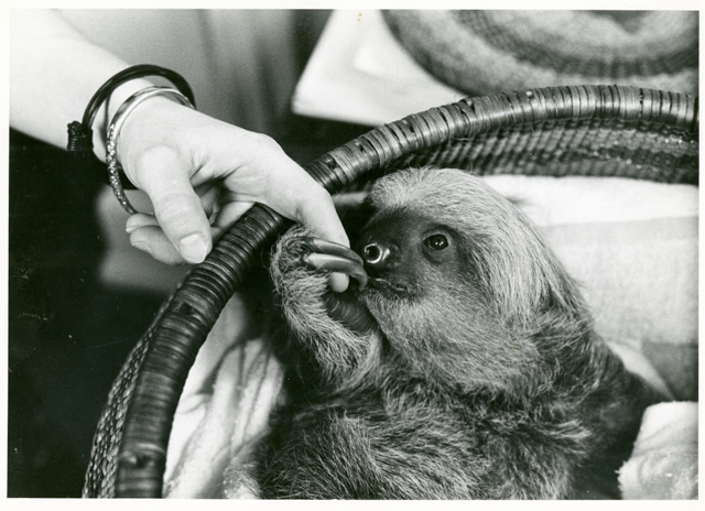 Mary Jane Sloth, 9 months, holding the finger of Marion P. McCrane, April 29, 1965, Photograph publi