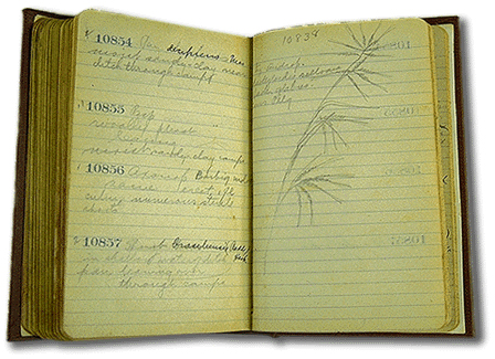 Image showing open lined notebook, with handwritten entries and botanical sketches