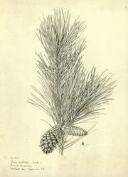 A botanical illustration by Frederick Andrew Walpole recently recovered.