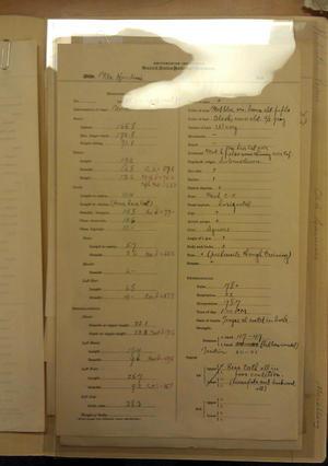Aleš Hrdlička's Measurement Chart of Harry Houdini