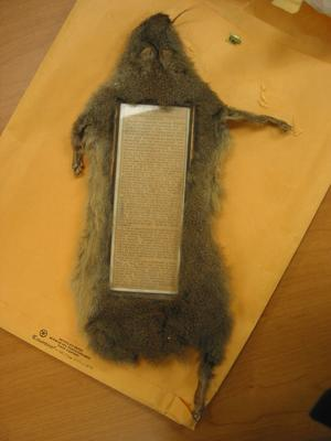 Squirrel frame found in a collection at the National Anthropological Archives.