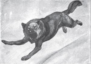 Illustration of a Gray Wolf Running, by Ernest Thompson Seton, 1902, Annual Report of the Board of R