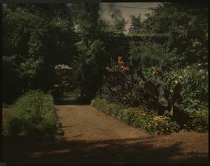 Rosecroft Begonia Gardens, 1920, by Alfred D. Robinson, glass autochrome, Garden Club of America Col