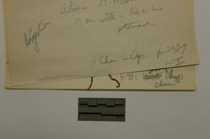 Degraded rubber band, October 2012, by Janelle Batkin-Hall, Watson Davis Papers, Smithsonian Institu