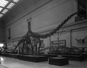Extinct Monsters Hall in the National Museum of Natural History, late 1930s, neg. no. MNH-32017A, to