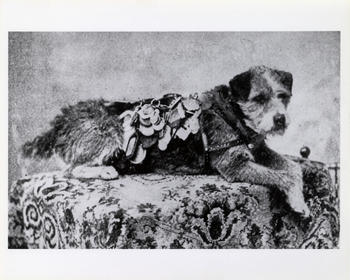 Owney, 1895, by Unidentified photographer, National Postal Museum.