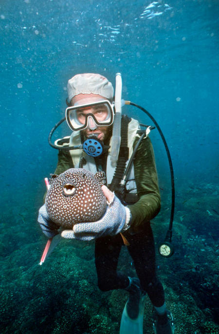 A scuba diver holds a pufferfish in the waters surrounding Barro Colorado Island