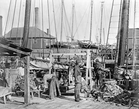 Unloading salt cod in Gloucester, Massachusetts, ca. 1880s.