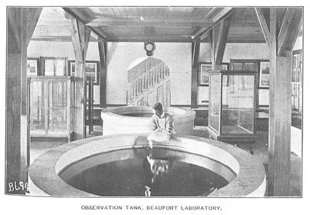 Observation Tank, Beaufort Laboratory.