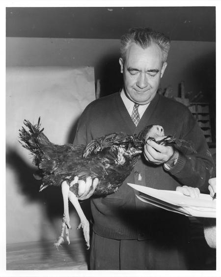 Dr. Marlowe W. Olsen holding a turkey.