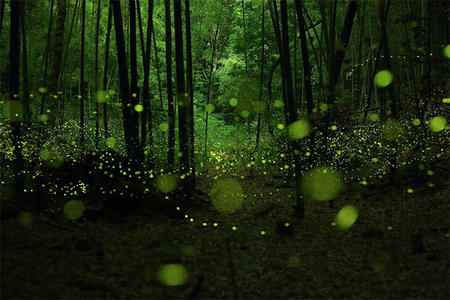 Long Exposure Photographs of Fireflies, by Yume Cyan.