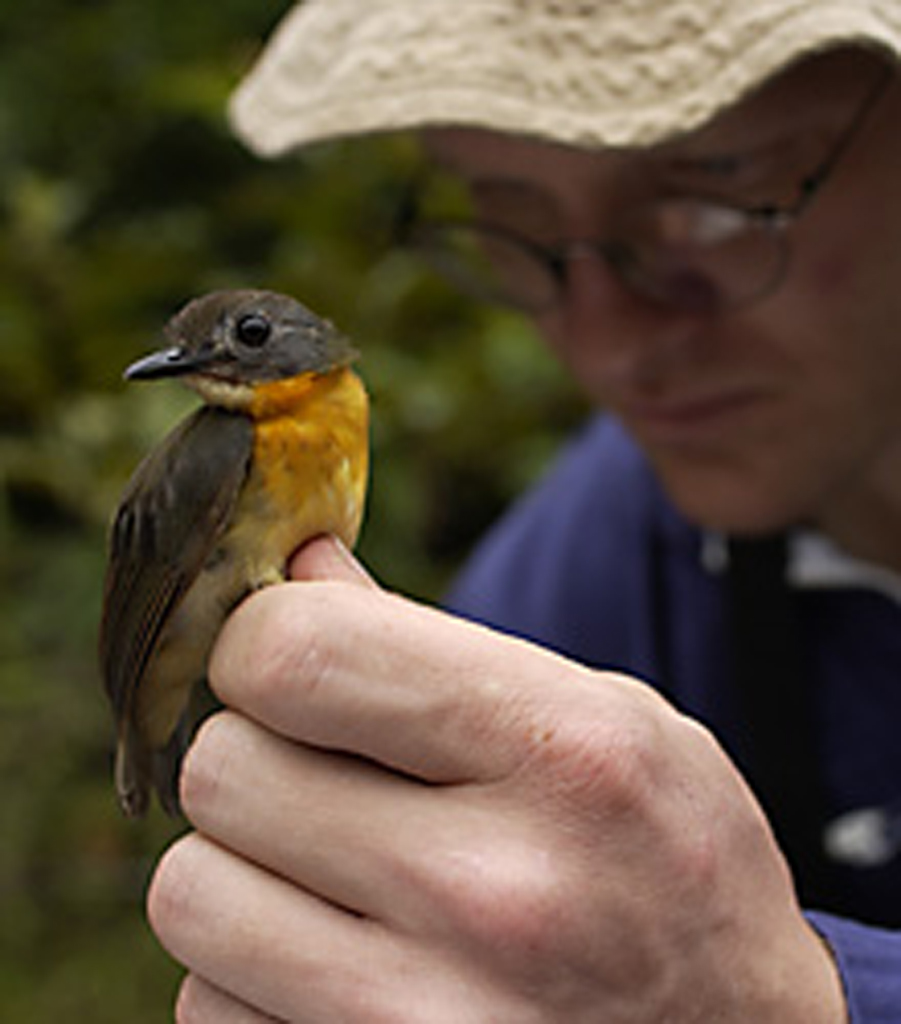 Aug 15 Brian Schmidt Holding an Olive-Backed Forest Robin