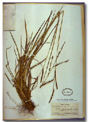 Image of dried plant on white background