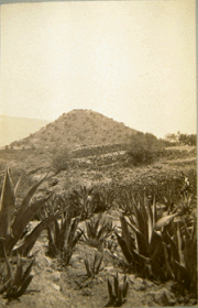 Sepia Photograph of a Pyramid of the Sun, with hill in background and plants in the foreground