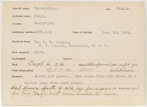 Record card for the first dingo to arrive at the National Zoo, 1901-1916.