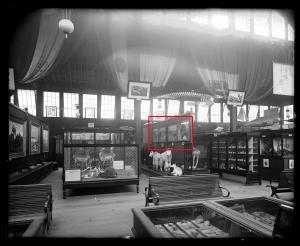 Hornaday's exhibition at the Cincinnati Centennial Exposition