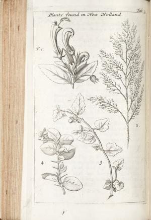 Book page with drawings of plants.