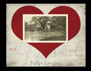 """Tulips for You"" - Trees and flowers in Farragut Square, by Martin A. Gruber Smithsonian Institution"