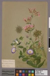 A watercolor of flowers with pink and purple petals.