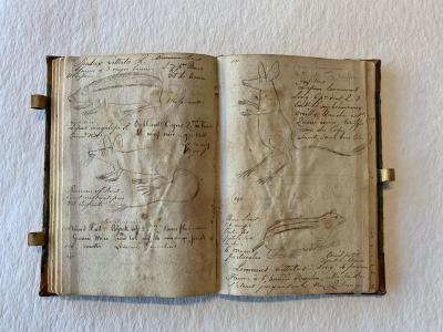 An open book. Both pages have sketches of creatures on them, drawn between handwritten notes.