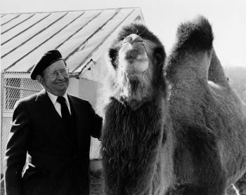 Theodore Reed with Camel at National Zoo, 1978, by Ilene Ackerman. Record Unit 371, Smithsonian Inst